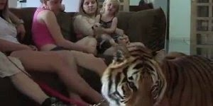 Vídeo com pessoas brincando com gatinhos, olha só o tamanho deles!!!