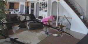 Vídeo de animais muito engraçado, kkk! Os cachorros em seus piores momentos!!!