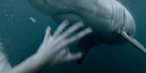 Vídeo de homem que pulou no mar e deu de cara com tubarão!!!