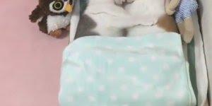 Vídeo mais fofinho que você verá hoje, olha só estes dois gatinhos!!!
