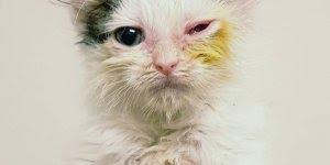 Vídeo mostrando a história de Zephyr, um gatinho que foi abandonado!!!