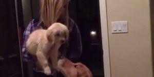 Vídeo mostrando cachorro recebendo mais um integrante da família!!!