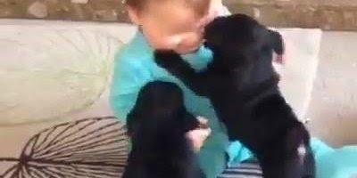 Bebê com filhotinhos de cachorro, que trio mais lindo e fofo gente!