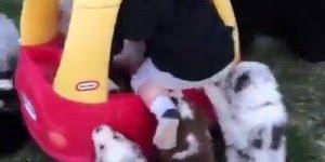 Bebê de carrinho no meio de muitos filhotes de cachorros, que fofura!