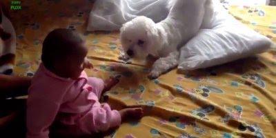 Bebês e cachorros, tem dupla melhor que essa? Muito fofos!!!