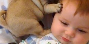 Bebês e seus cachorros, que dupla mais linda de se ver, CONFIRA!