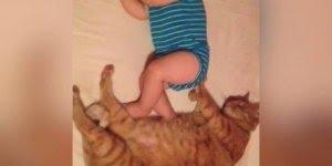Momentos entre bebês e gatos, que amizade mais linda, confira!