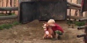 Criança consegue laçar um boi bravo, veja que coisa mais fofa!