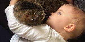 Criança conversando com gato, e parece que estão se entendendo!
