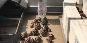 Criança e suas tartarugas, veja quantas ele tem que alimentar todos os dias!