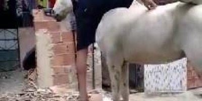 Criança monta em cavalo sozinho, enquanto o adulto leva um tombo kkk!
