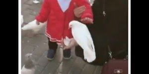 Criança vai alimentar os pombos e quase mata um, é muito engraçado hahaha!