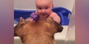 Crianças dando risadas com cachorros, tem amizade mais linda?