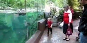 Garoto brincando com lontra marinha, os dois se deram muito bem!