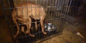 60 cachorros foram resgatados de uma situação terrível, confira!