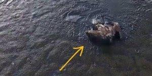 A história da águia na lama que teve um final feliz, confira!