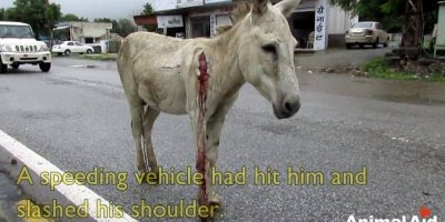 A historia deste jumento é muito triste, ele foi resgatado das ruas!!!