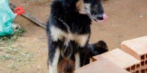 Ação para ajudar cachorros abandonados, é de doer o coração!