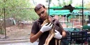 Cachorrinho estava a beira da morte, mas um anjo apareceu para salvá-lo!