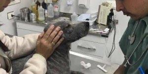 História de cachorro que foi abandonado e esteve a beira da morte!!!