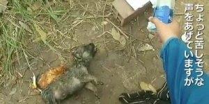 Homem encontra filhote de cachorro se afogando e faz algo inacreditável!