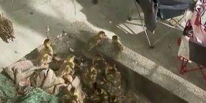 Homem salva 11 patinhos que iriam morrer por pular de lugar alto!