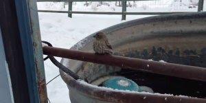 Homem salva passarinho que estava com pés presos no gelo!