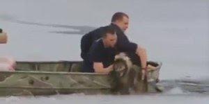Homens entra no gelo para salvar animal quase congelado, que atitude linda!