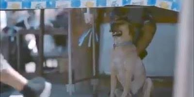 Menino abraça cachorros de rua, veja o video e descubra o resultado!