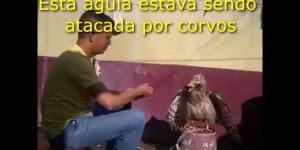 Observe como uma pessoa trata os animais e saberá como ela irá te tratar!