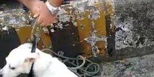 Policial salvando cachorro que estava preso em um ribeirão, confira!!!