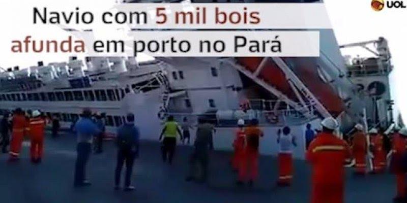 Cenas impressionantes! Um navio com cerca de 5 mil bois afundam no porto de para