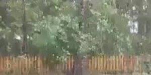Força do vento de uma tempestade arrancando uma arvore do chão!!!