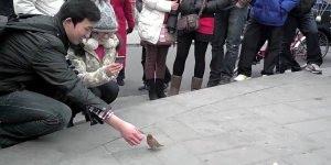 Que passarinhos mais espertos, eles pegam as moedas e colocam nos cofrinhos!!!