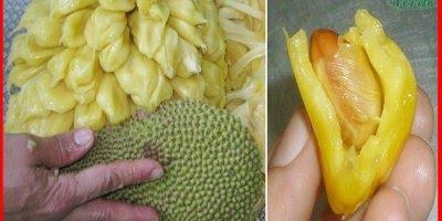 Fruta que foi descoberta como anti câncer, vale a pena conferir!