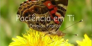 Texto Paciência e Ti na voz de Divaldo Franco, vale a pena conferir!!!