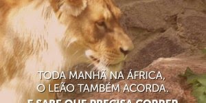 Você é uma gazela ou um leão? Não importa, comece a correr!!!