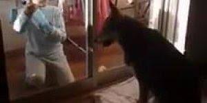 Criança limpando porta de vidro, parabéns para os pais dele!