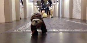 Diretamente de Star Wars um Ewoks, só que não, kkk! Mas ficou muito fofinho!!!