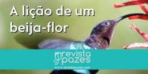 História do Beija-flor, que posamos refletir com esta belíssima história!!!