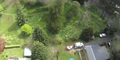 Homem cortando tronco de uma Árvore super alta, que coragem!!!