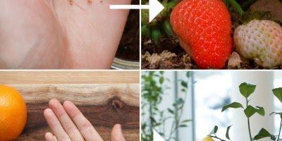 Tutorial de como plantar legumes e frutas, vale a pena conferir!!!