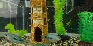 Vídeo com ideia super bacana para você fazer em seu aquário!!!