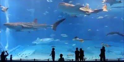 Vídeo mostrando um doa maiores aquários do mundo que fica no Japão!!!