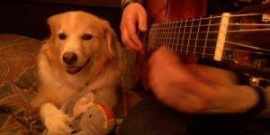 Cachorrinho que adora ouvir musica, por musica todo mundo gosta!!!
