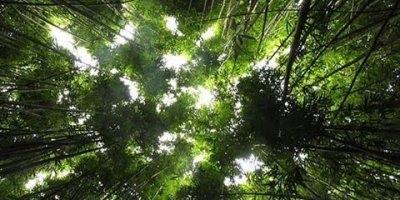 As mais belas imagens da natureza, como Deus é fantástico em suas obras!!!