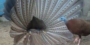 Aves diferentes e lindas, mais um presente da natureza!