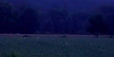 Campo cheio de vaga-lumes, como a natureza é fantástica, confira!!!