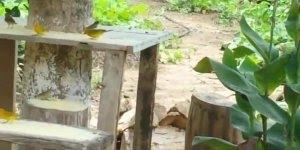 Canarinhos da Terra livres na natureza, pois é assim que deve ser!!!