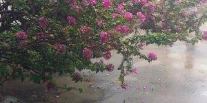 Chuva abençoada, quem ama chuva compartilhe este lindo vídeo!!!